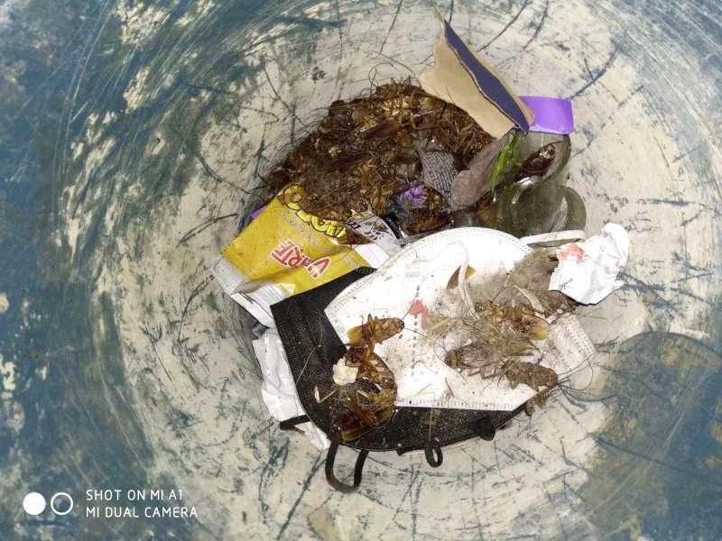 Imagen de las cucarachas en Port de Sagunt. / EPDA