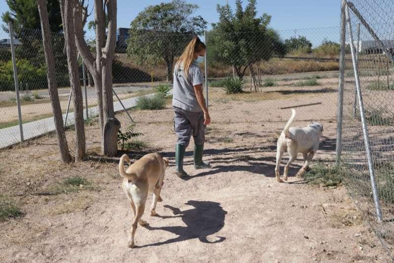 Protectora de animales. EPDA.