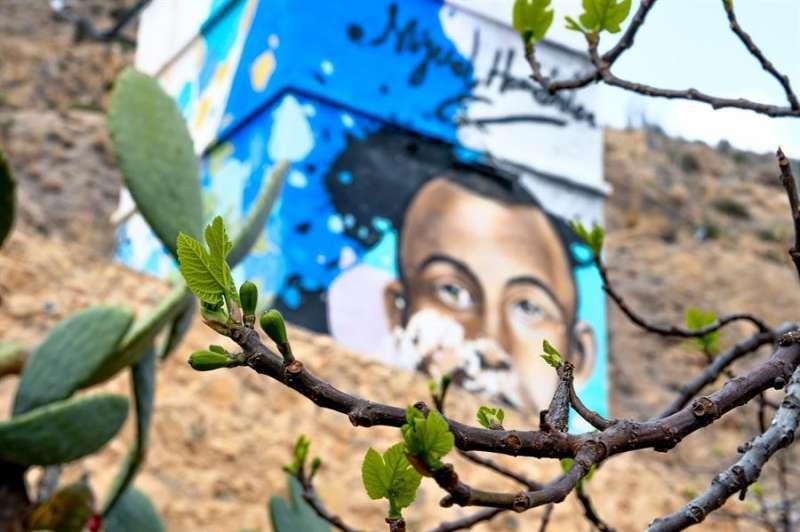 Detalle de la higuera en la casa natal de Miguel Hernández, en una imagen facilitada por el Ayuntamiento de Orihuela.