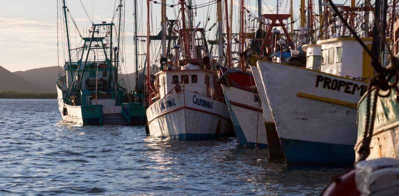 Barcos. EPDA