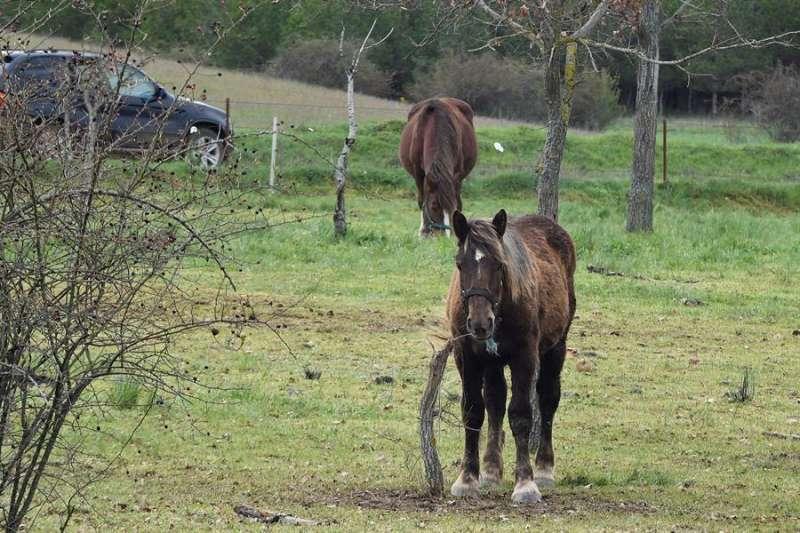 Dos caballos pastan en un terreno. EFE