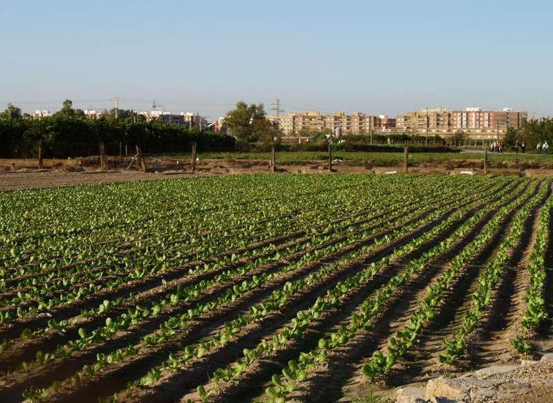 Huerta a las afueras de València.