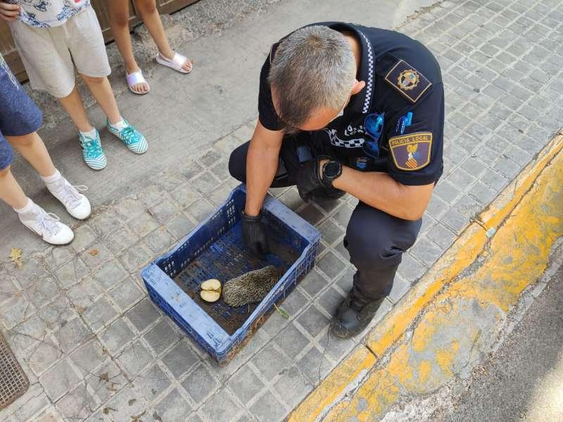 El agente coloca al erizo en un cajón. EPDA