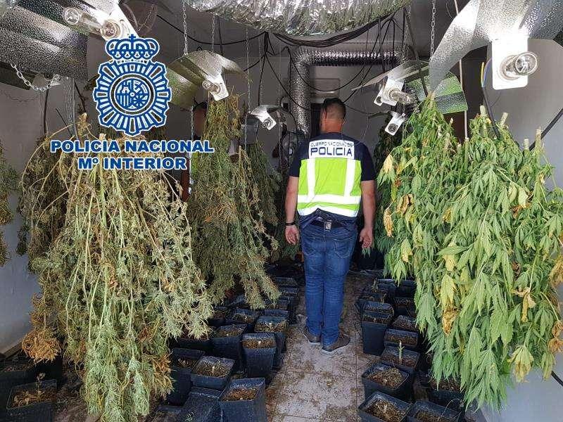 Una imagen de la plantación, facilitada por la Policía. EFE