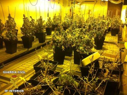 Plantación de marihuana. FOTO: GC