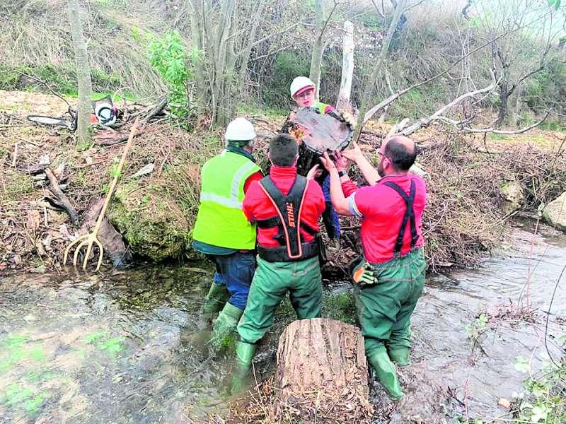 Trabajos de la Brigada Forestal