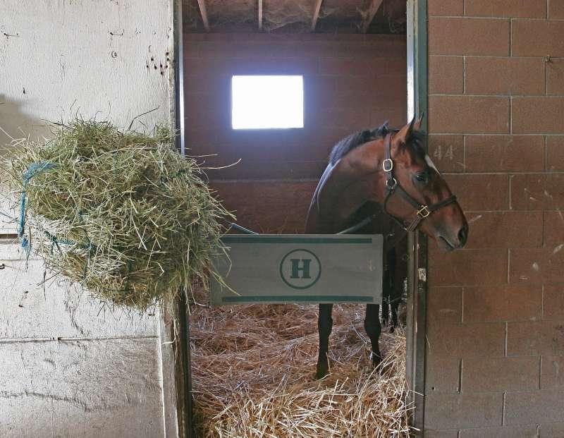 Un caballo en el interior de una cuadra. EFE/Archivo