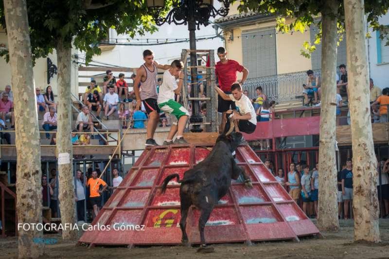 Toros en Soneja. Foto:C.Gómez