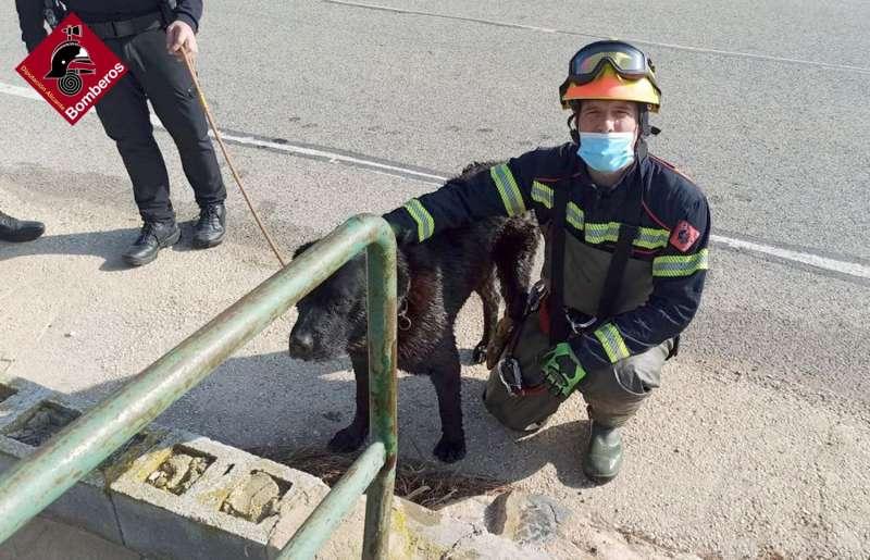 Un bombero junto al perro rescatado