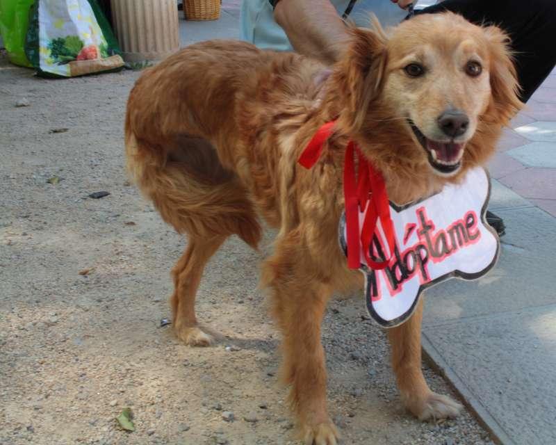 Un gos que espera ser adoptat. / EPDA