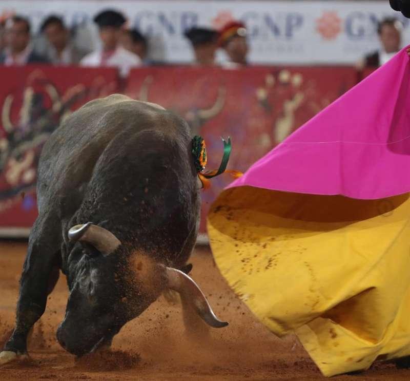 Un toro arremete contra un capote durante un festejo taurino. EFE/Archivo