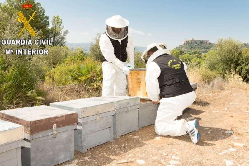 Asentamientos de apicultores en la localidad de Montesa.