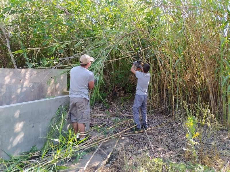 Tareas de desbroce de malas hierbas y eliminación de cañas. / EPDA