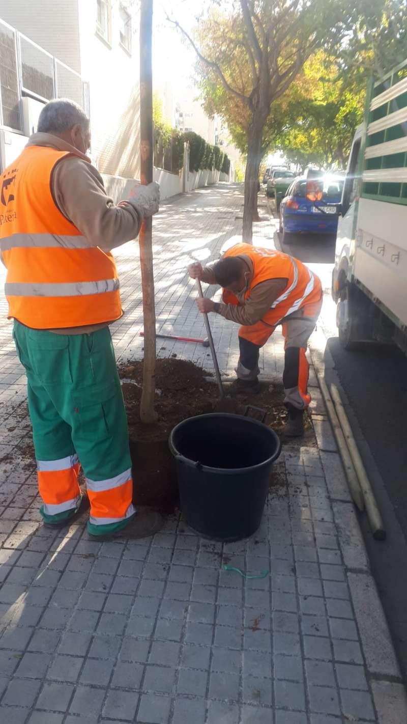 Plantación de árboles en Paterna. EPDA
