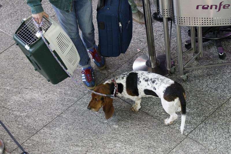 Un perro espera para viajar en una estación de tren. EFE/Archivo