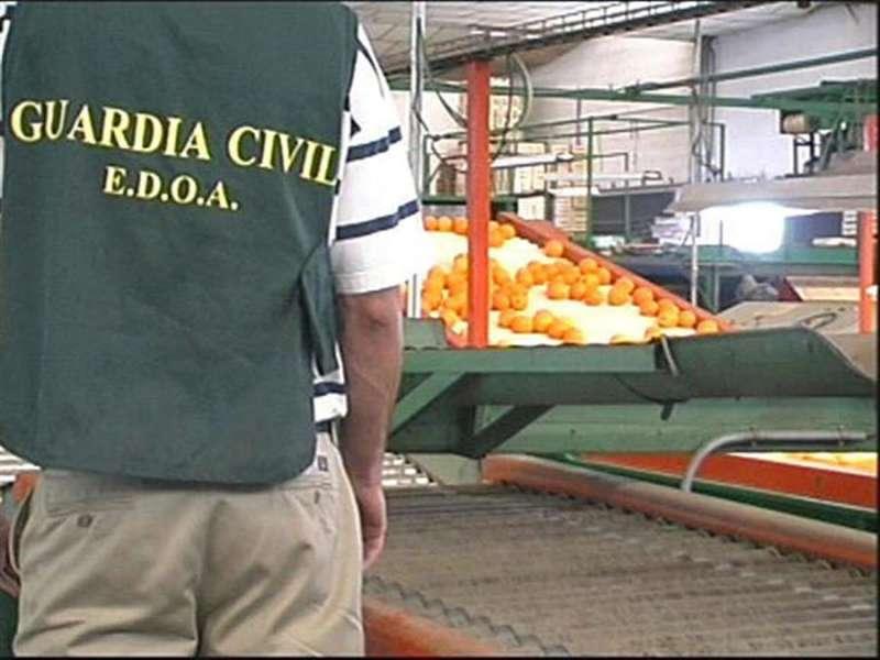 Un agente de la Guardia Civil en una operación con naranjas. EFE/Dirección Guardia Civil