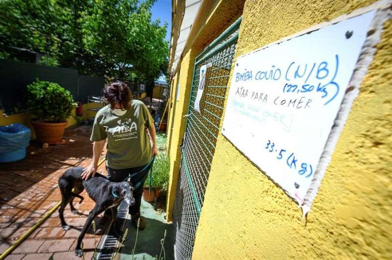 Una trabajadora de la asociación Alba, dedicada a la adopción de mascotas. EFE/Fernando Villar/ Archivo