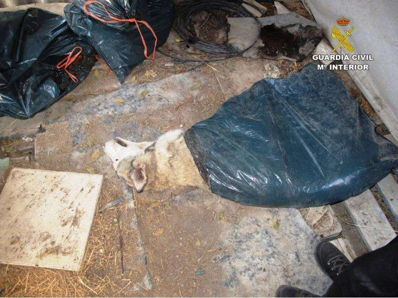 Imagen de uno de los perros muertos, facilitada por la Guardia Civil. EFE