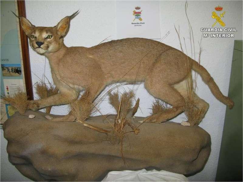 Una imagen del felino disecado, facilitada por la Guardia Civil. EFE