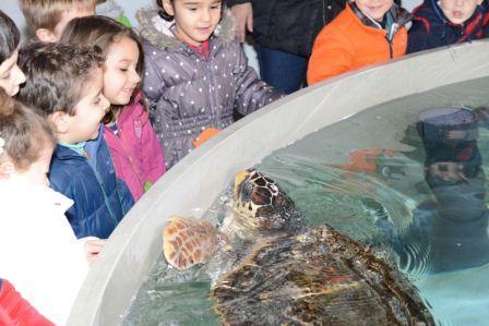Los alumnos disfrutan de las tortugas marinas en el Oceanogràfic.