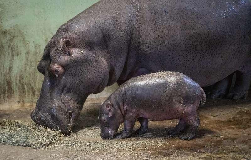 El bebé con su madre eb BIOPARC Valencia. EPDA