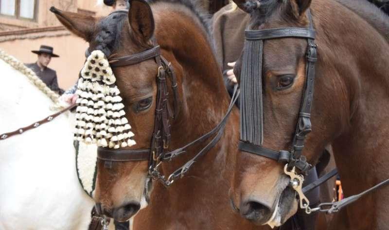 Dos caballos durante las bendiciones del año pasado. EPDA