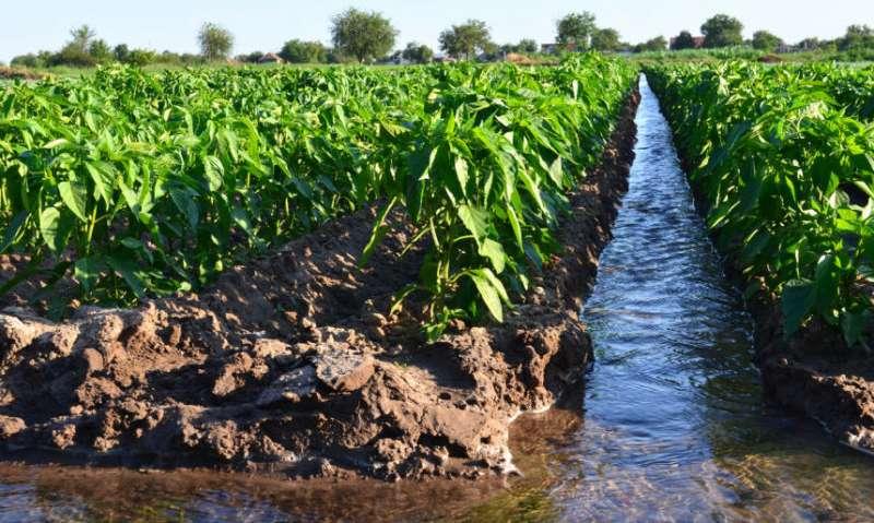 Las explotaciones se quedan sin agua