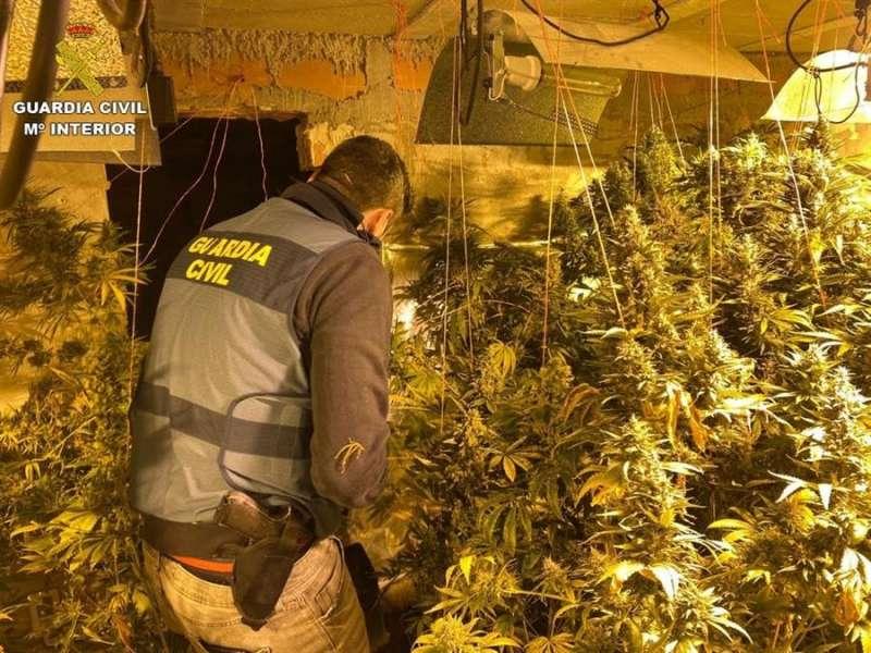 Imagen facilitada por la Guardia Civil de la plantación de marihuana desmantelada en Rojales (Alicante). EFE