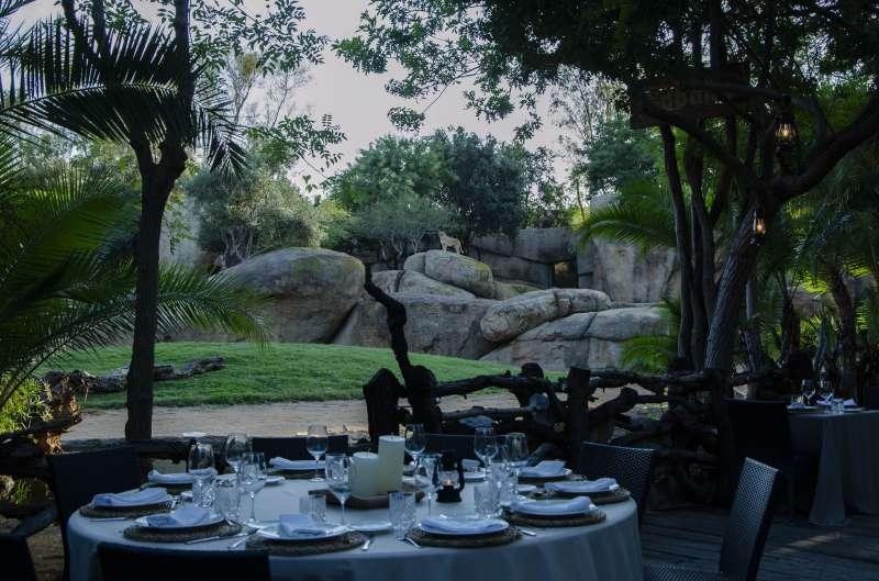Las Cenas en la Sabana - BIOPARC Valencia verano 2020