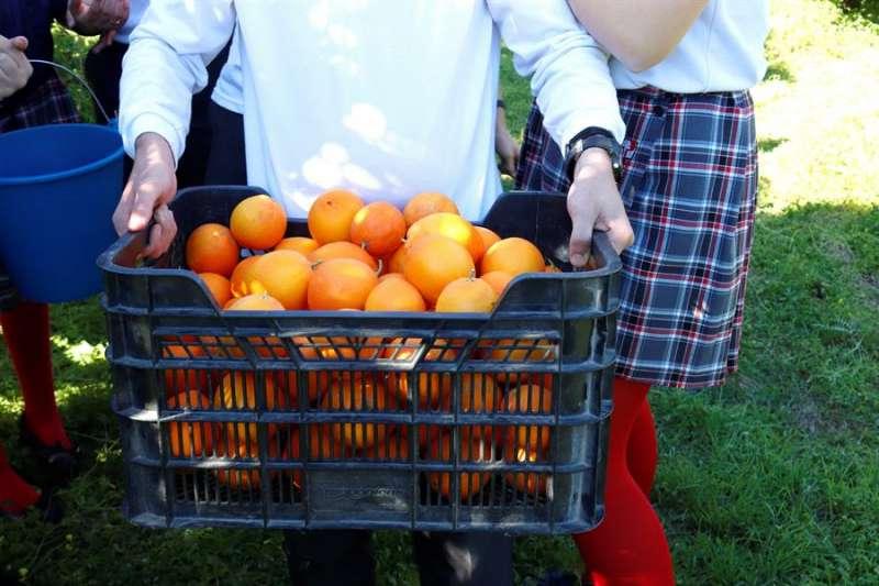 Un hombre transporta una caja con naranjas en una imagen de archivo. EFE