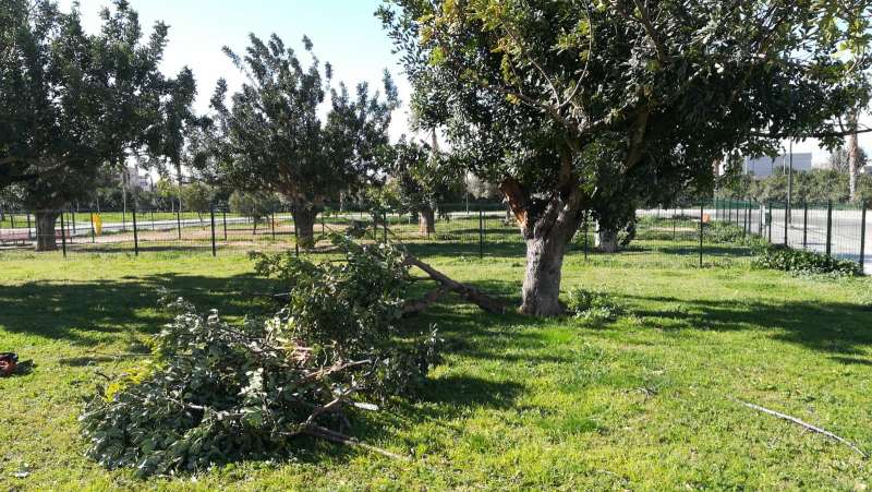 Árboles caídos en Paterna. EPDA