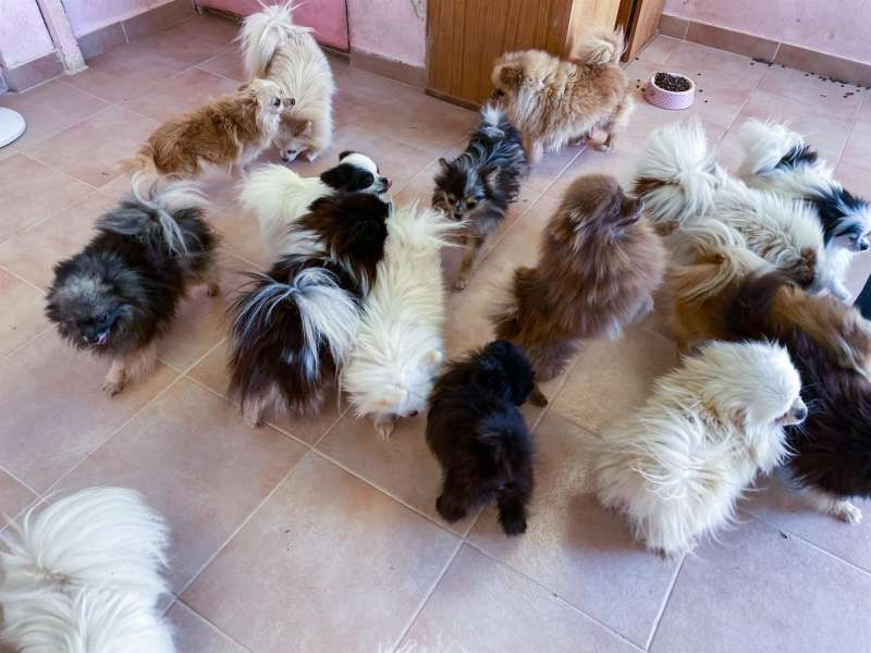 Una imagen de los animales intervenidos.