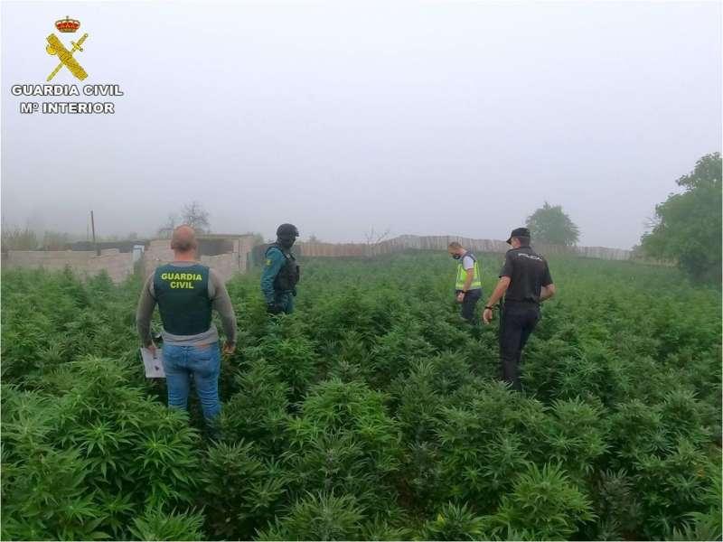 Plantación descubierta en la operación, en una imagen de la Guardia Civil.