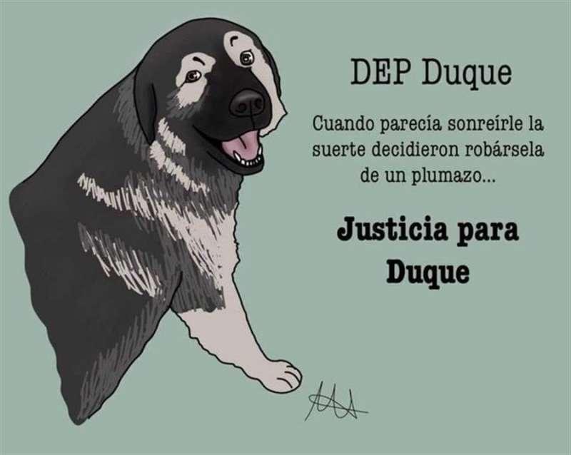 Fedanimal, que es representada por la abogada Raquel Sánchez Navarro, denunció el pasado noviembre que Duque era un perro sano, fuerte y de complexión musculosa de raza. EPDA