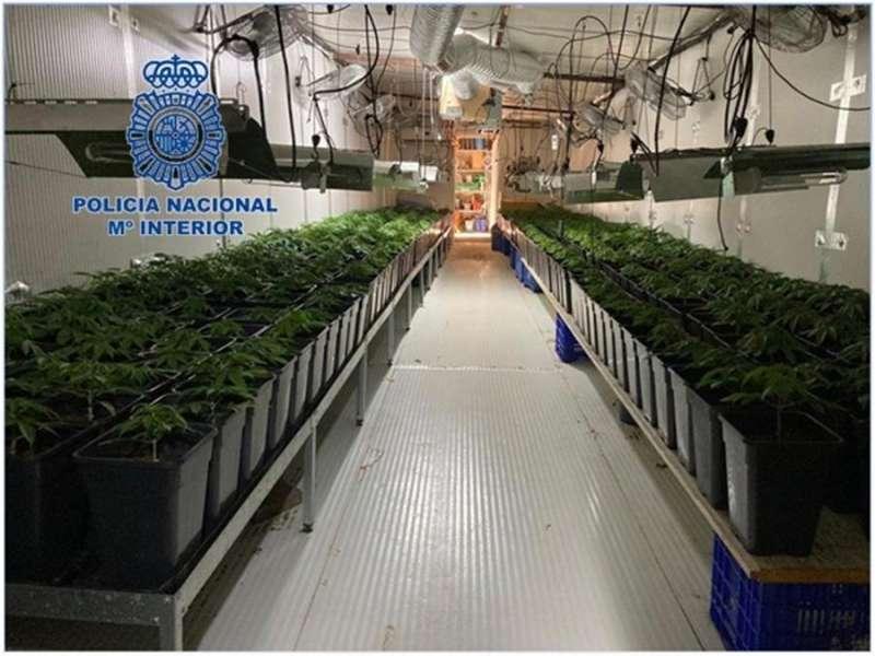 Fotografía de una plantación de marihuana desmantelada por la Policía en Llíria. EFE/Policía