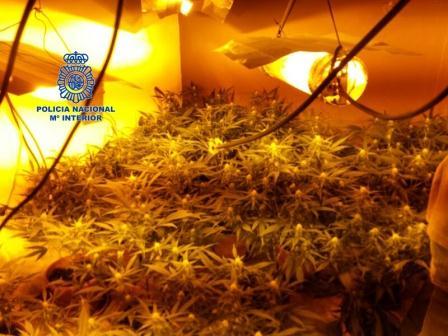 Se han intervenido 184 plantas de marihuana, 35 focos de iluminación, 36 transformadores, 1.600 euros y una escopeta entre otros efectos.