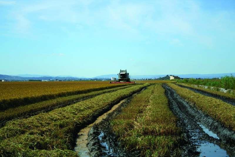 Campo de cultivo.