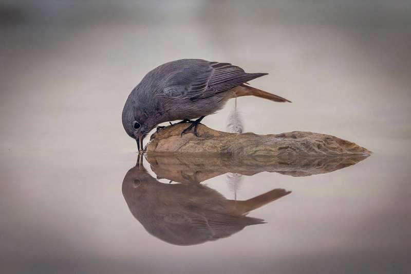 El pájaro, de F. Herrero