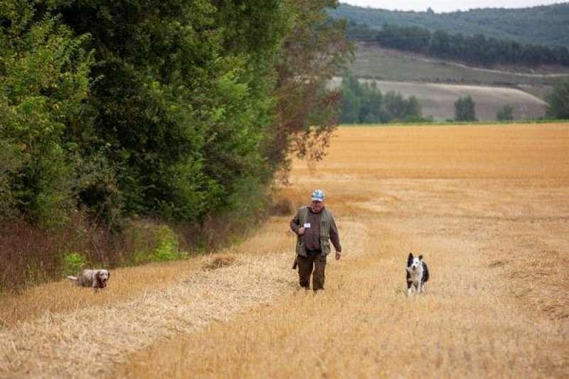 Imagen de archivo de un cazador rastreando con sus perros un campo de cereal en busca de codornices. EFE/David Aguilar/Archivo./ EPDA