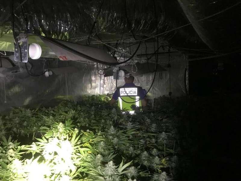 Registros de la Policía Nacional en una finca rural y en el domicilio de un matrimonio detenido en Gandía donde se han intervenido290 plantas de marihuana, 23 focos, transformadores, extractores y 840 euros. EFE/Policía Nacional