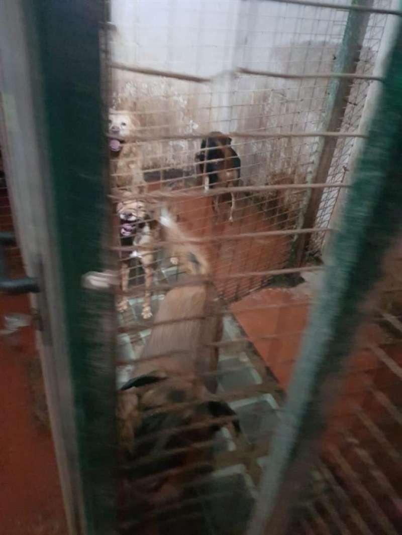 Algunos de los perros rescatados, en una imagen facilitada por la Policía Local.