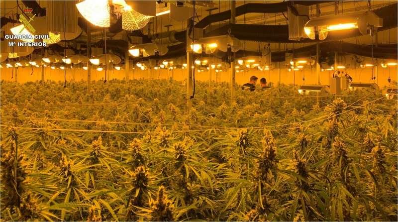 Imagen de la plantación de marihuana desmantelada en Sax (Alicante) facilitada por la Guardia Civil.