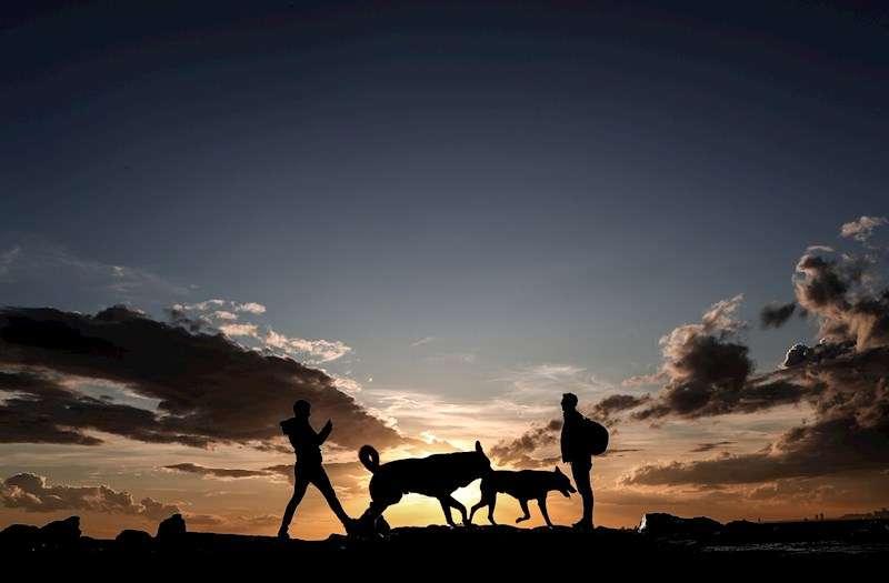 Dos personas pasean a sus perros. EFE/Archivo
