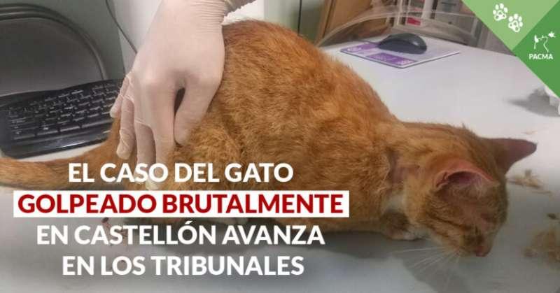 Imagen de PACMA del gato maltratado en Castelló