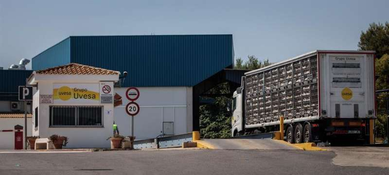 Un camión con gallinas a la entrada principal de la empresa cárnica Grupo Uvesa de Rafelbunyol. EFE