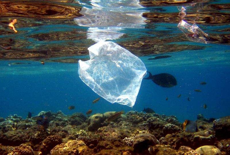 Peces y bolsas de plástico comparten espacio en el mar. EFE/Archivo