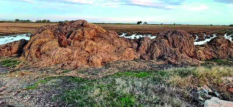 Paja del arroz acumulada en el Parque Natural. EPDA