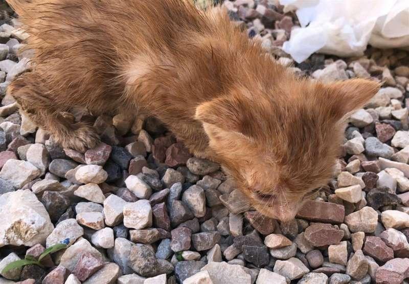Uno de los cachorros de gato que estaba encerrado en una maleta precintada. EFE/Ayuntamiento Alicante