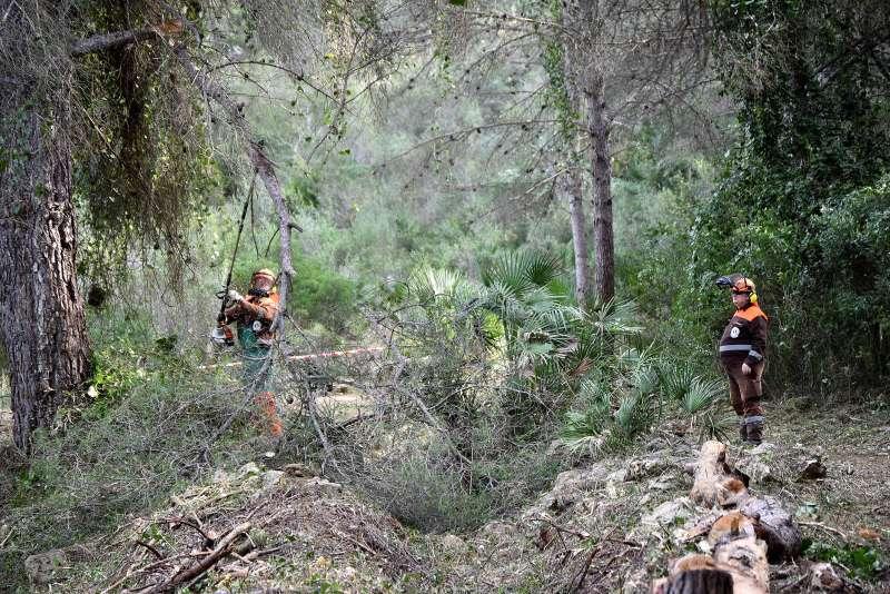 Brigadas forestales de Divalterra