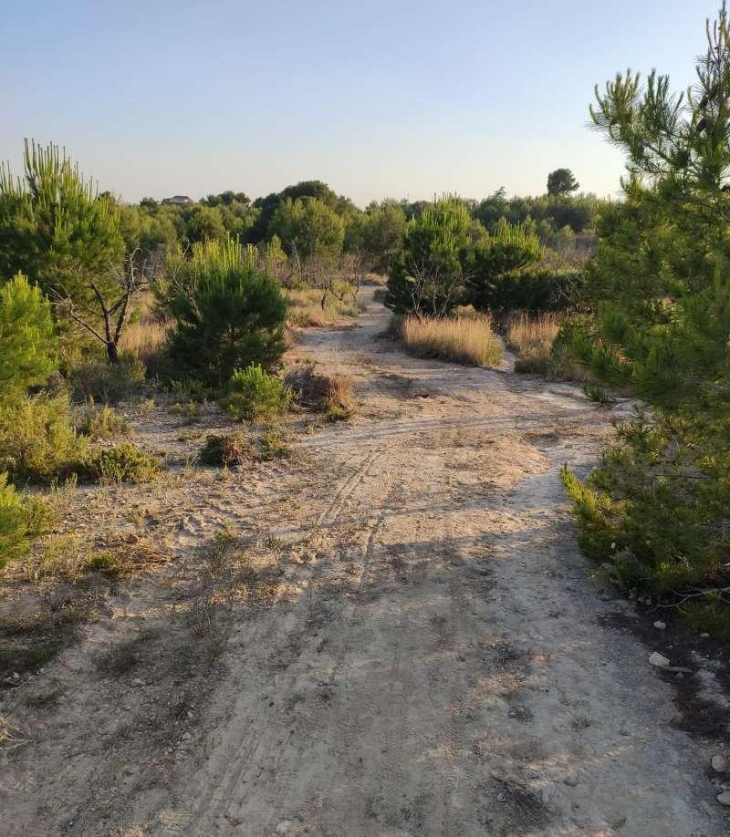 Imagen tomada hoy jueves en la citada zona de Godella. EPDA